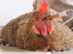Smokin Chicken on Flickr Photo Sharing 300x220 The Chicken and the Egg Social Media Conundrum