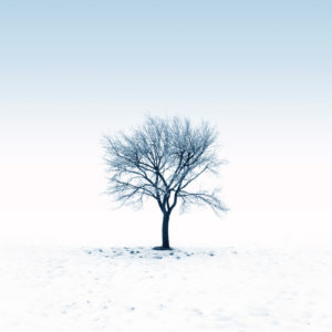 bare tree 300x300 Its More About the Social Than It Is About the Media