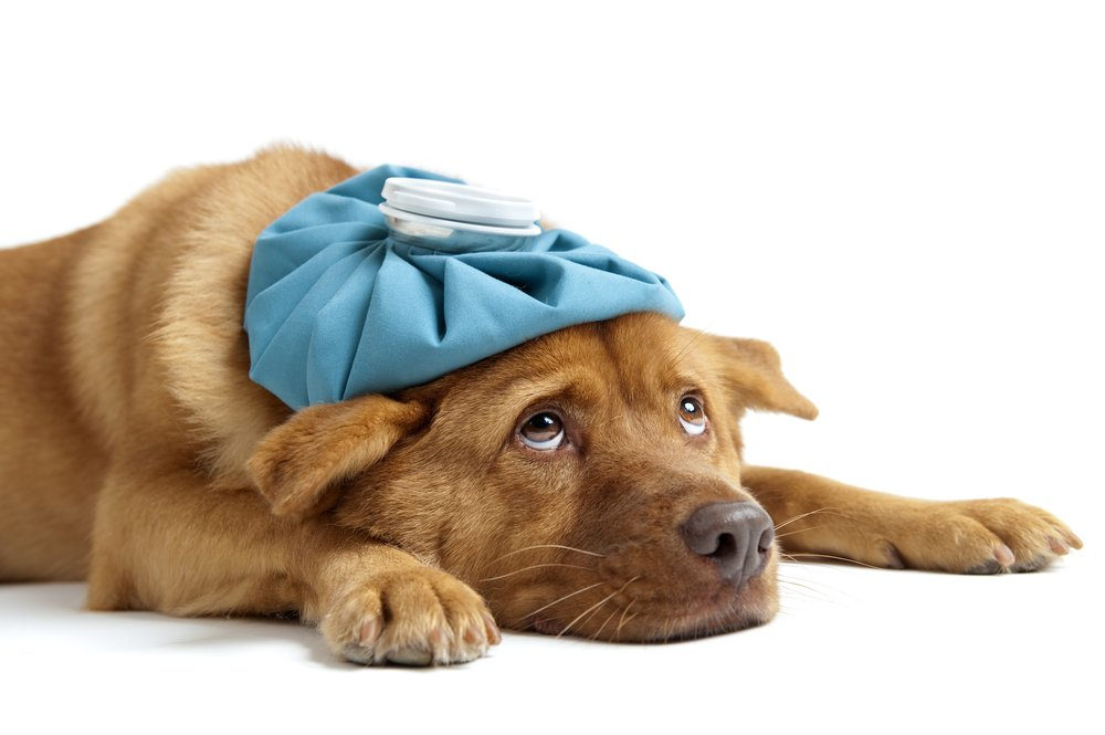 Sick dog is helped with Hilton Suggests