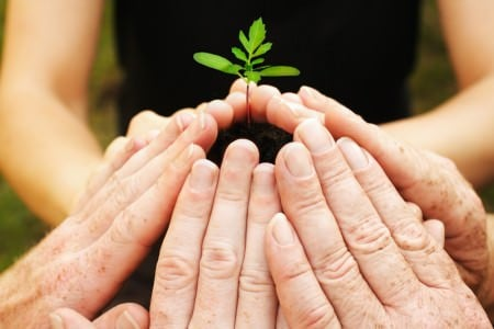 plant hands