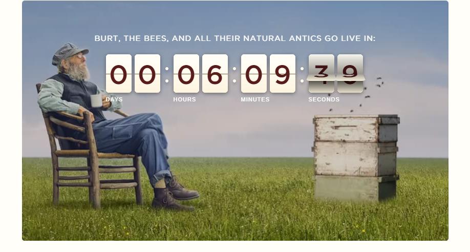 Beeday2 Burt's Bees Turns To Social Media Community To Host Global Beeday Celebration