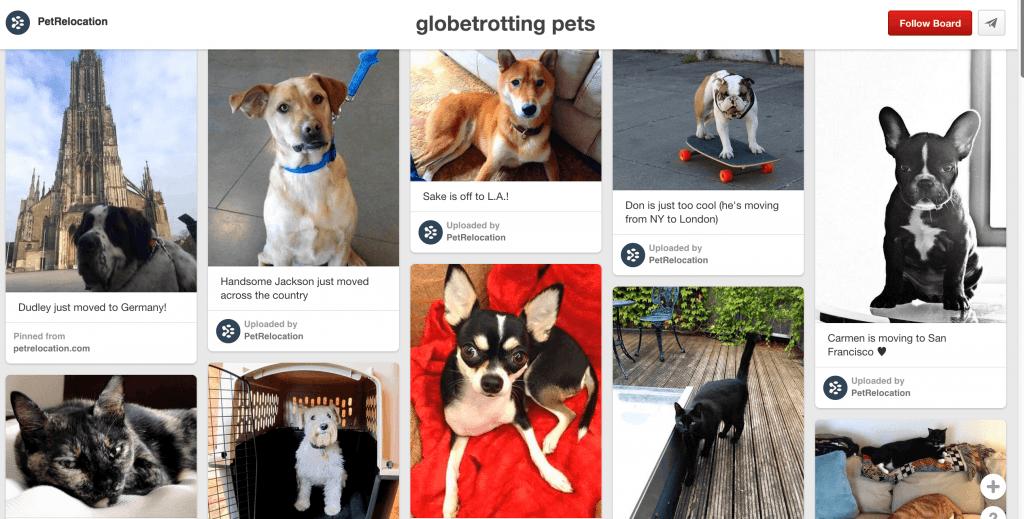 globetrotting pets
