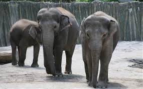 elephant-style company culture