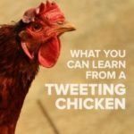 What You Can Learn from a Tweeting Chicken