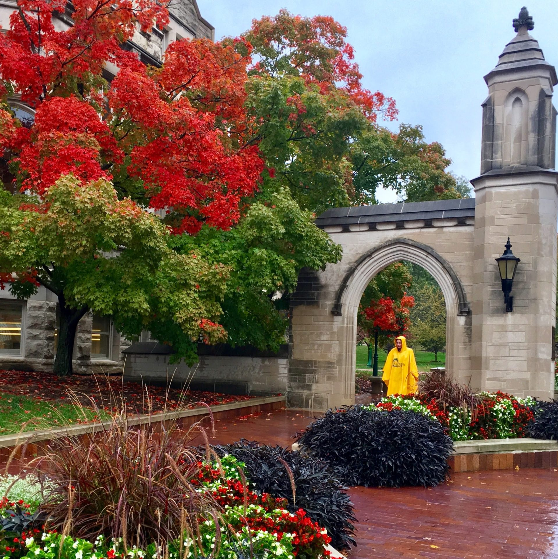 IU Bloomington autumn leaves Instagram post