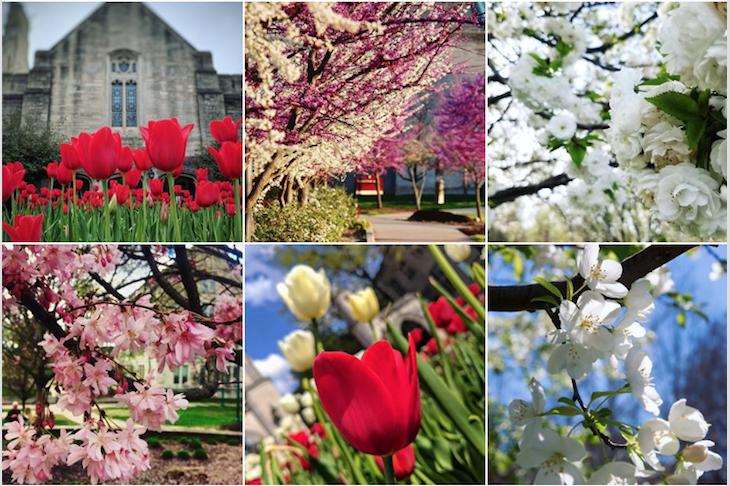 IU Bloomington spring flowers Instagram post