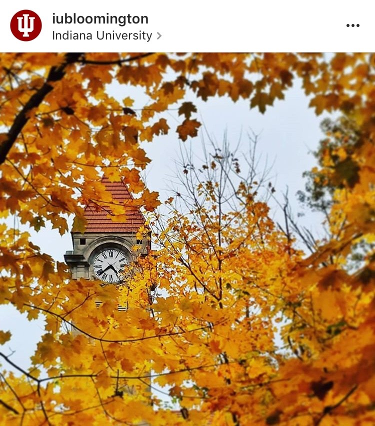 Indiana University autumn leaves Instagram post